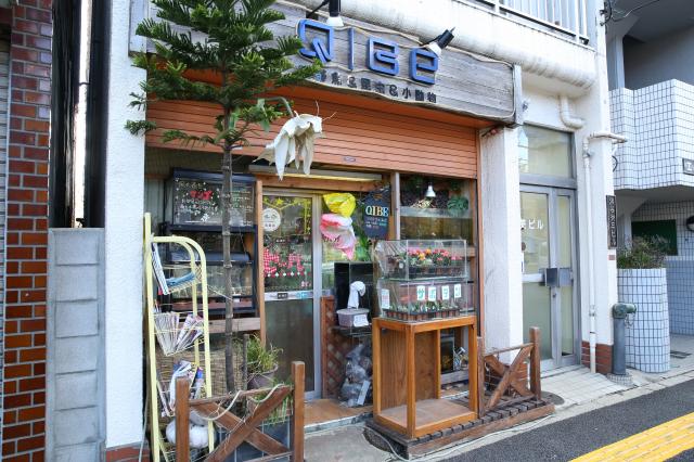 Pet Shop Q|BE
